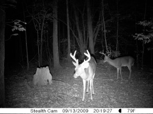 6 and 8 point that came in with a 5 and 6 point on season opener